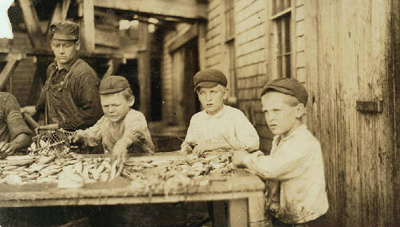Three young cutters who work in Seacoast Canning Co., Factory #4. Ages 10 to 12. Work regularly. Daniel Collins (right), cousin Rob Collins (middle) Eastport, Maine, August 1911, Lewis Hine.
