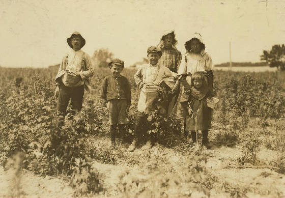 Slebzak family (individual identities not clear), near Pasadena, Md, July 1909. Photo by Lewis Hine.