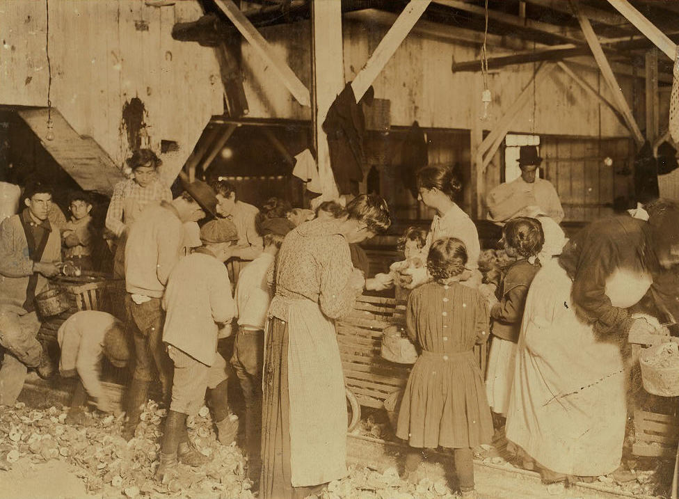 Oyster shuckers at work in Barataria Canning Company. Small girls working on right of photo are Gertrude Kron, five years old, Pauline ---, eight years old. Note the face of little Mildred Kron, near center of photo, three years old, works every day, mother said. Also small boy on left of photo who has dropped an oyster. Location: Biloxi, Mississippi, February 1911, Lewis Hine.